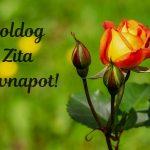 Zita névnapi képeslap