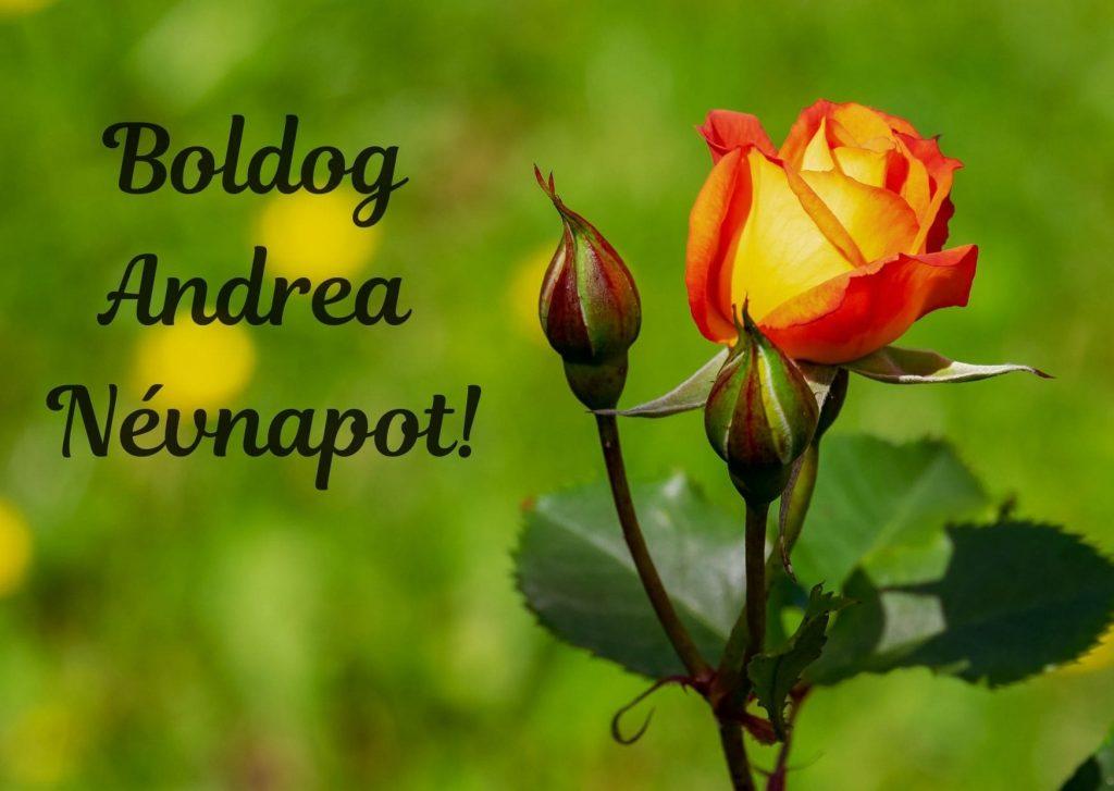 andrea névnapi képeslap